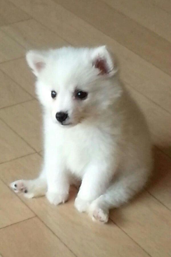 puppy02.jpg